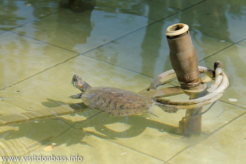Черепаха в фонтане. Зоопарк Деревня Вашуры в Мариуполе