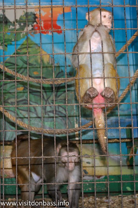 Обезьяна в клетке. Зоопарк Деревня Вашуры в Мариуполе