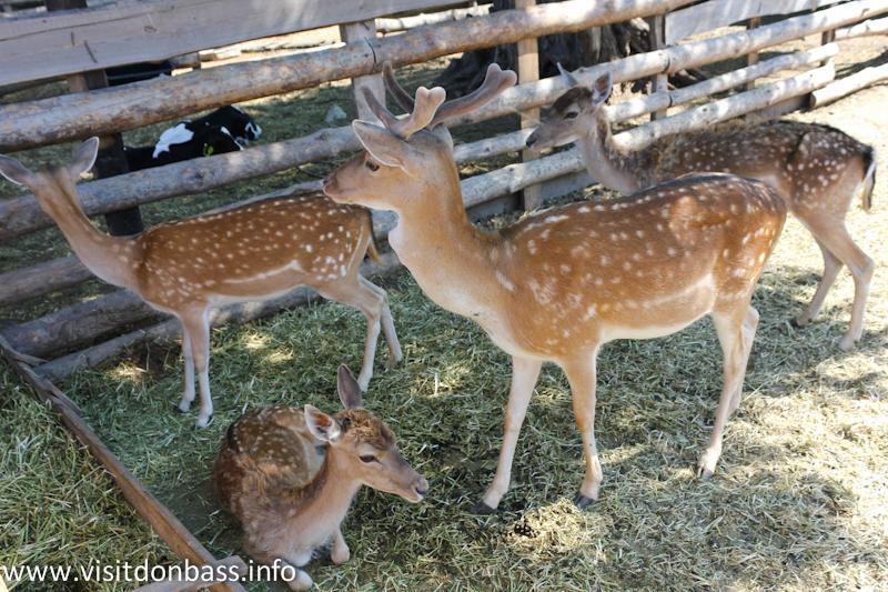Семейство оленей. Зоопарк Деревня Вашуры в Мариуполе