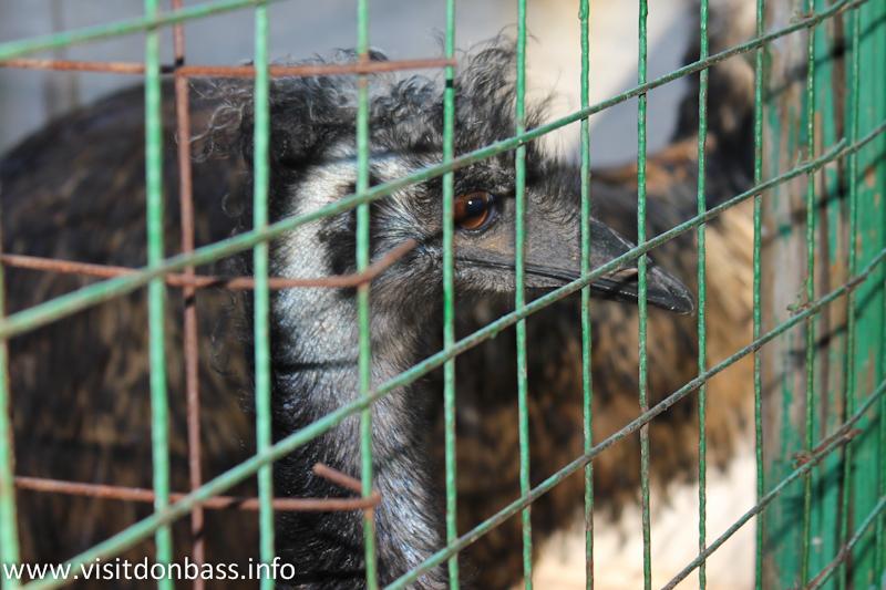 Страус. Зоопарк Деревня Вашуры в Мариуполе