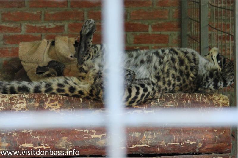 Маленький леопард. Зоопарк Деревня Вашуры в Мариуполе