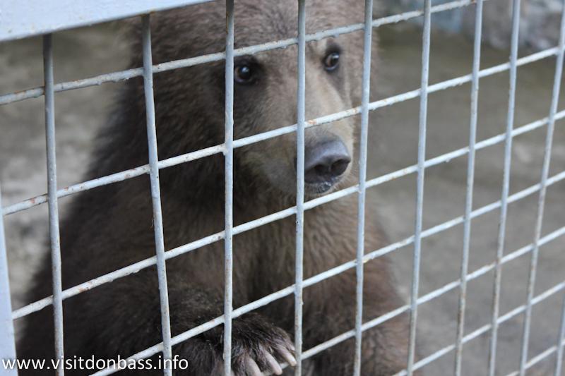 Медвежонок. Зоопарк Деревня Вашуры в Мариуполе
