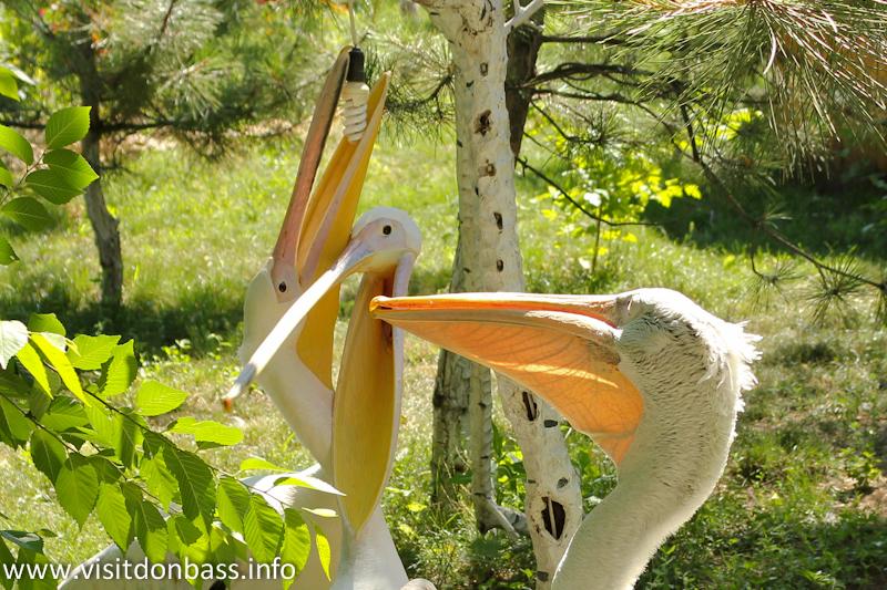 Пеликаны вкручивают лампочку. Зоопарк Деревня Вашуры в Мариуполе