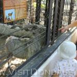 Винторогие козлы доверчиво кормятся из рук посетителей, Докучаевск зоосад
