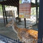 Пятнистые олени - милые зверюшки, Докучаевск зоосад