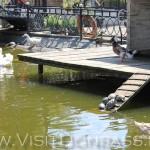Кучка булыжников - это черепахи выползли погреться, Докучаевск зоопарк