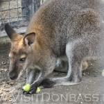 Это не Австралия, сгодятся и яблоки, Докучаевск зоосад