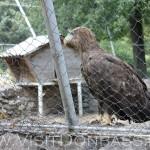 Огромные хищные птицы могут летать в этом вольере, Докучаевск зоосад