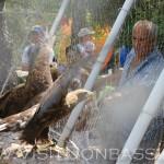 Хищные птицы - главная изюминка зоопарка в Докучаевске