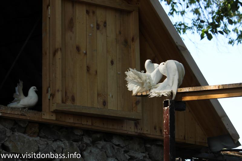 Пара голубей. Зоопарк Деревня Вашуры в Мариуполе