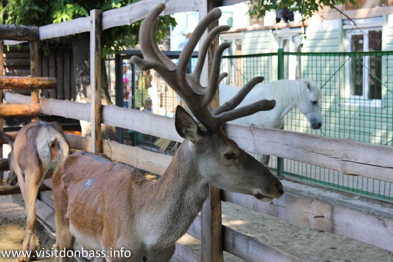Благородный олень. Зоопарк Деревня Вашуры в Мариуполе