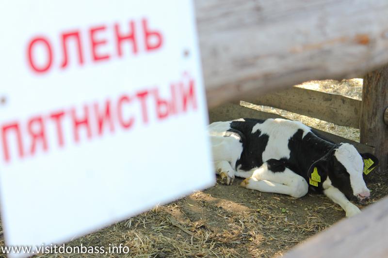 Корова или пятнистый олень? Зоопарк Деревня Вашуры в Мариуполе