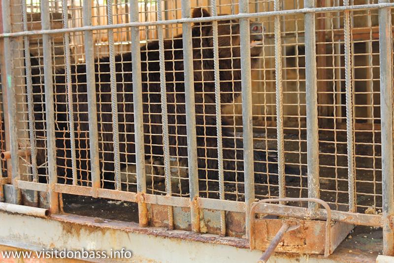 Медведь за тройной решеткой. Зоопарк Деревня Вашуры в Мариуполе