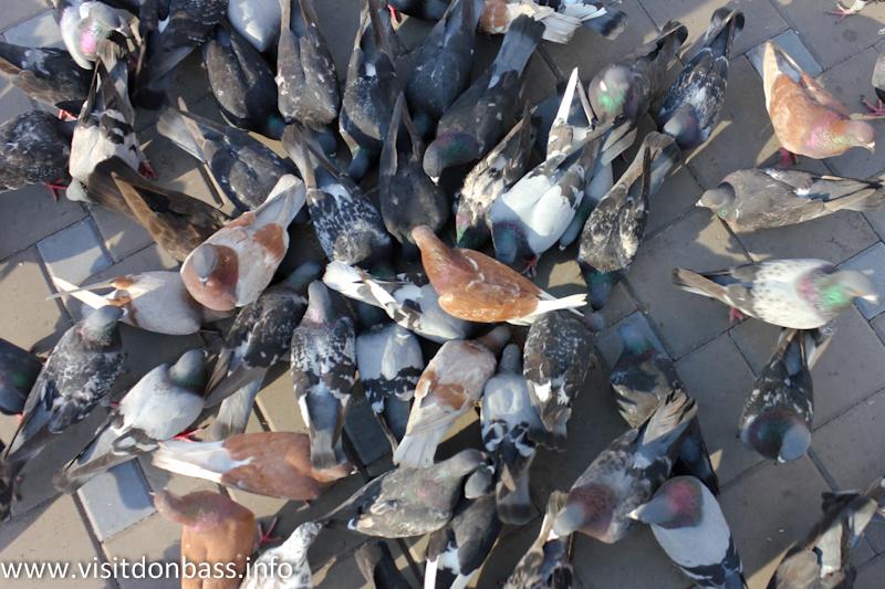 А дети и молодежь подкармливают театральных голубей