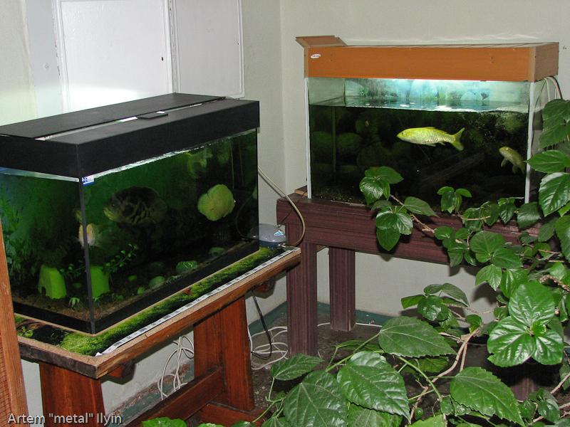 Зооуголок в кураховском бассейне