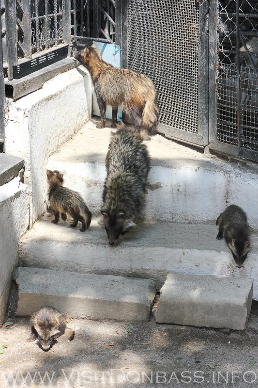 Семейство енотовидных собак, зоопарк Докучаевск