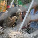 Здешние беркуты отгорожены от населения, Докучаевск зоопарк