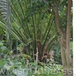Оранжерея, она же Ботанический сад, вид через окно, Докучаевск